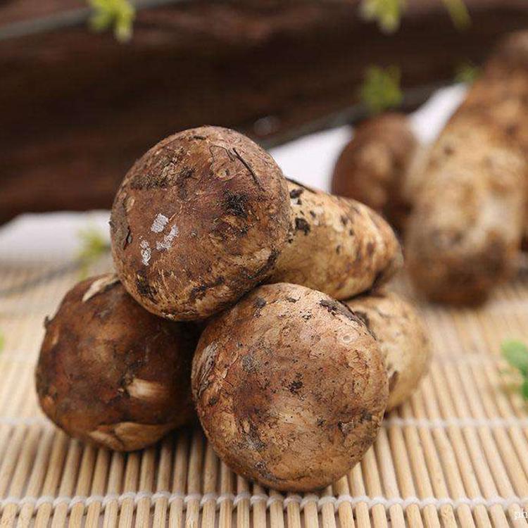 松茸野生新鲜松茸菌菇云南特产香格里拉一级现货松耸